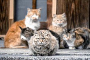 大阪に存在する空き家の実態